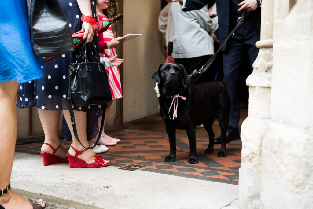 Dog at wedding London
